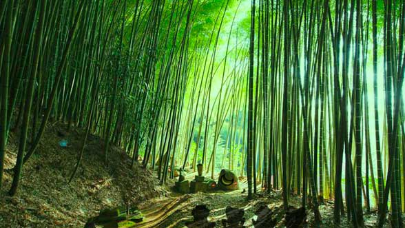Wow Bamboo Forest Monkey Escape