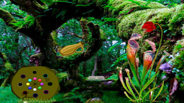 Carnivorous Plants Forest Escape